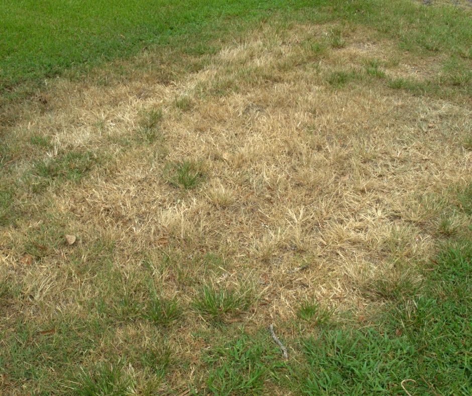 How to Get Rid of Brown Patches on My Lawn?
