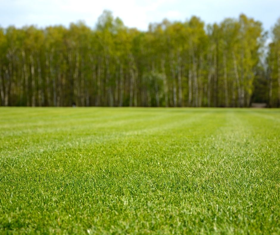 Should You Get Ready For Spring Seeding?