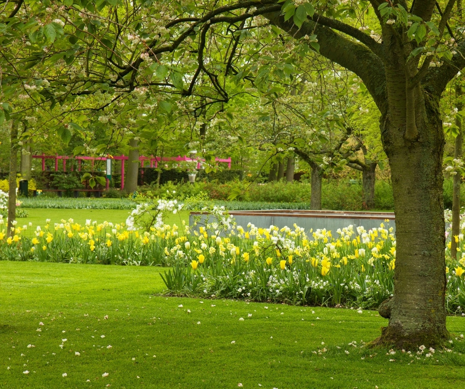 Spring Lawn Care Chester County PA